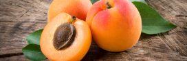 Comment faire germer un noyau d'abricot?