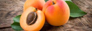 Comment faire germer un noyau d'abricot ?