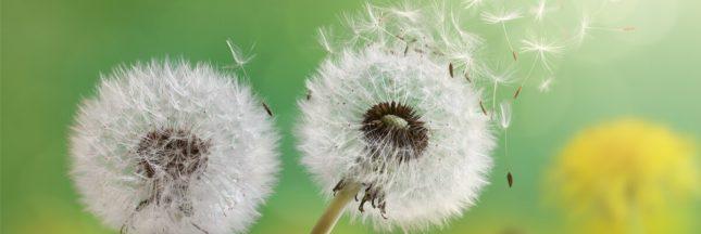 Pollen : quand la nature nous tourmente