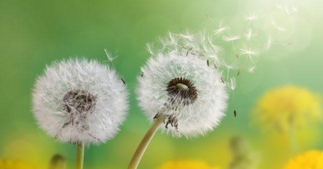 Pollen: quand la nature nous tourmente