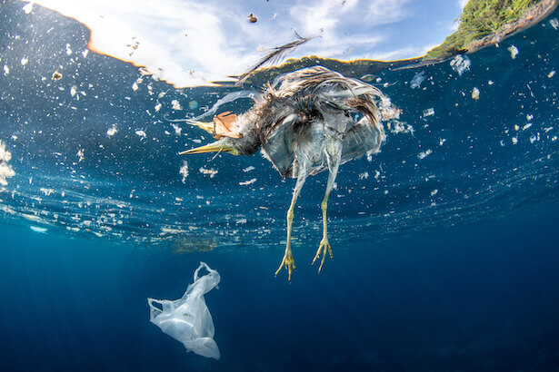 pollution plastique à qui la faute