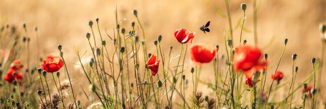 Avec le printemps arrive la Semaine pour les alternatives aux pesticides !