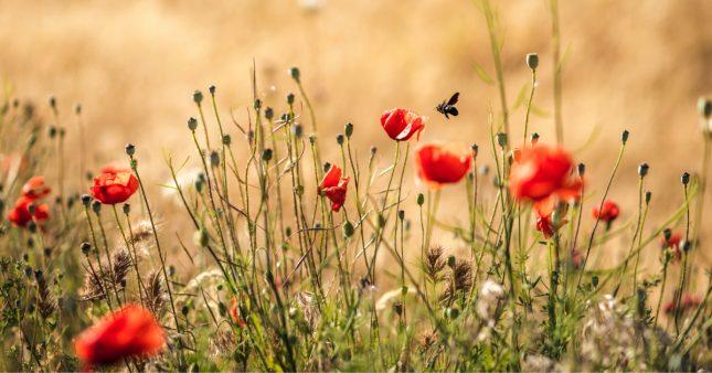 Avec le printemps arrive la Semaine pour les alternatives aux pesticides!