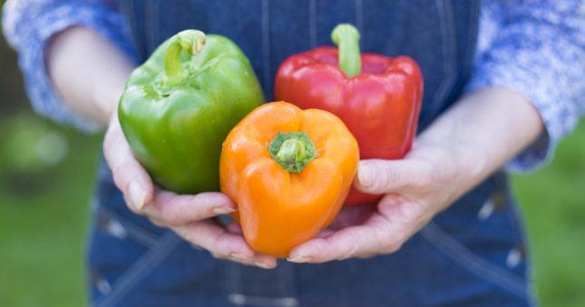 Comment réussir ses semis de poivrons et de piments année après année