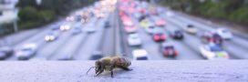 Villes de Miel récompense les communes qui s'engagent pour la biodiversité