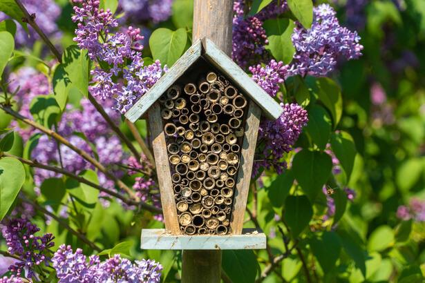 abeilles nid