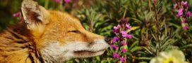 10 animaux à observer au printemps