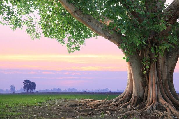 Déclaration des droits de l arbre