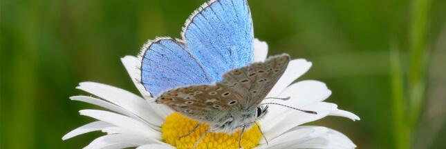 Insectes pollinisateurs - Il n'y a pas que les abeilles domestiques !