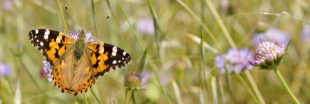 10 papillons pollinisateurs de France