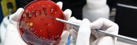 Candida auris, le germe tueur qui se répand à travers le monde