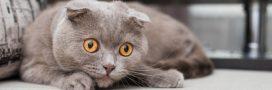 Certaines races de chats sont désormais interdites à Bruxelles!