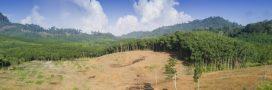 Une surface de forêts tropicales primaires grande comme la Belgique a disparu en 2018