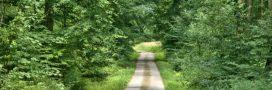 L'Homme et la forêt: quelle alliance face aux changements climatiques?