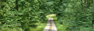 L'Homme et la forêt : quelle alliance face aux changements climatiques ?
