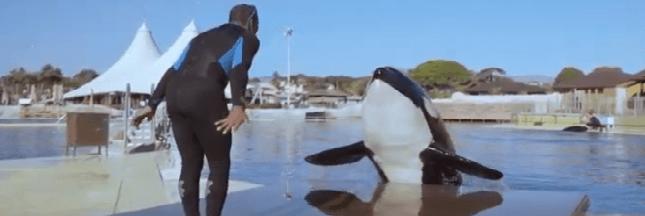Orques en captivité : One Voice s'apprête à porter plainte contre le Marineland d'Antibes