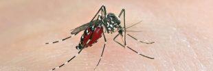 Le moustique tigre a conquis presque toute la France