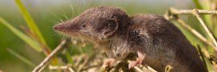 Nos formidables alliés en lutte biologique - La Musaraigne