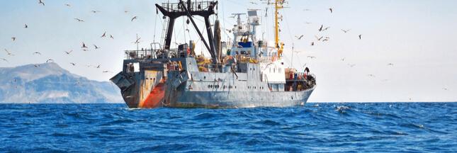 Pour protéger ses ressources, la Sierra Leone interdit temporairement la pêche industrielle