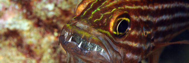 Le réchauffement climatique pourrait influer sur le sexe des poissons
