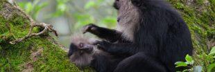 Our Planet- Découvrez Notre Planète l'incroyable série animalière de Netflix