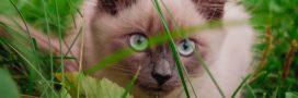7 types de plantes toxiques pour vos animaux de compagnie