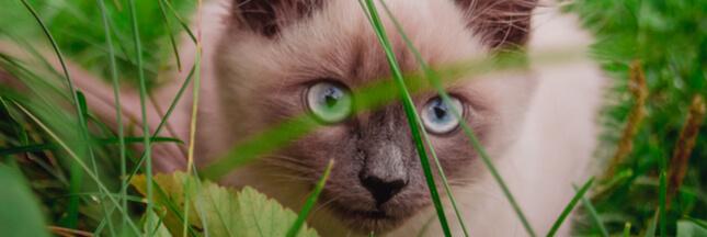 plante toxique chat