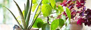 Les soins à apporter à vos plantes d'intérieur en avril