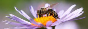 Sondage - Allez-vous aider abeilles et pollinisateurs cette année ?