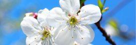 Jardiner en avril: jardin et potager au printemps