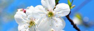 Jardiner en avril : jardin et potager au printemps