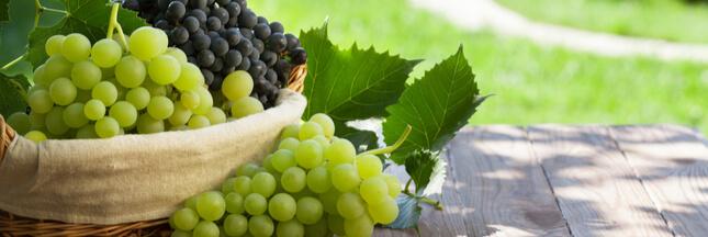 Comment faire germer un pépin de raisin