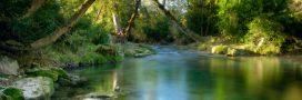 Nos lacs et rivières regorgent-t-ils de perturbateurs endocriniens?