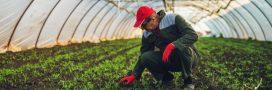 Serres chauffées, vrac, semences… Tout ce qui change pour l'agriculture bio!