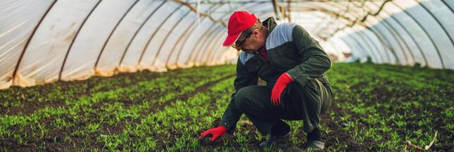 Serres chauffées, vrac, semences... Tout ce qui change pour l'agriculture bio !