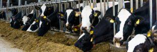 Des étables plus saines et moins de pollution avec CowToilet, les nouvelles toilettes pour vaches !