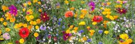 Créez votre Zone de BZZZ, une action simple pour protéger les abeilles