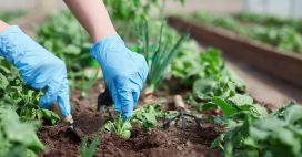 L'association de cultures, pour jardiner sans pesticide