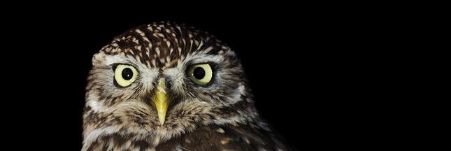 8 oiseaux à observer la nuit