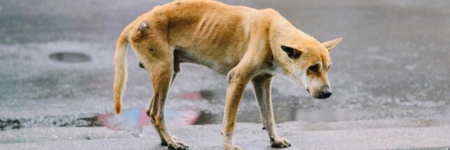 Le Code juridique de l'animal évolue