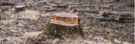 Forêts publiques: un décret pourrait favoriser le déboisement et abattre l'ONF