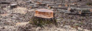 Forêts publiques : un décret pourrait favoriser le déboisement et abattre l'ONF