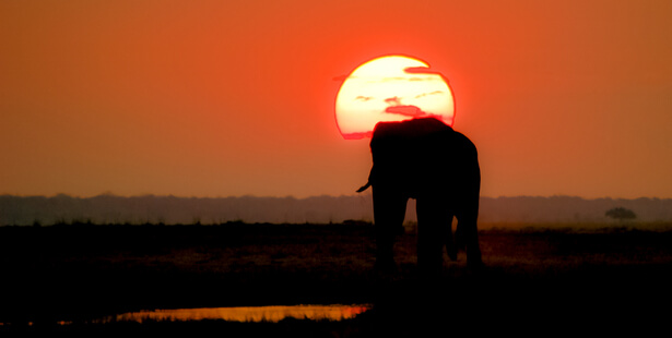 chasse elephants autorisee botswana