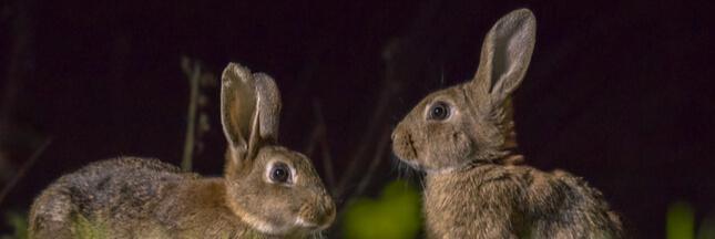 8 mammifères à observer la nuit