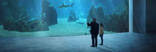 À Bâle, le vote citoyen s'oppose à la construction d'un grand océanarium