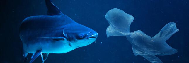 Du plastique découvert à 11.000 mètres de profondeur