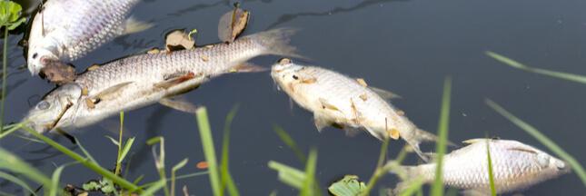 Nouveau cas de pollution dans une rivière vendéenne !