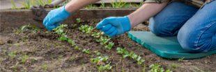 Jardiner en mai : jardin et potager au printemps