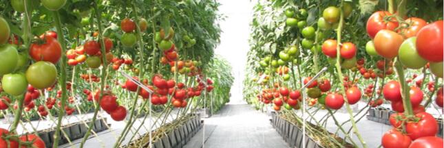 Agriculture bio – Le chauffage des serres: une trahison de l'esprit du bio?