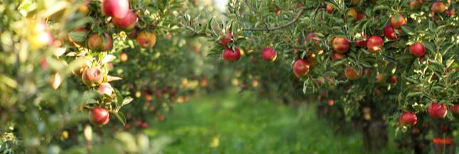 7 façons de favoriser la biodiversité dans votre verger